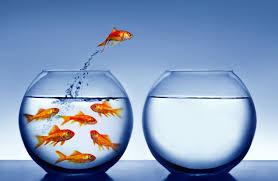 Changements dans l'entreprise :  pour quoi, comment et avec qui?